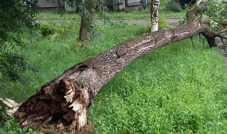 Что делать и куда звонить, если упало дерево